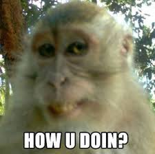 Funny Monkey Meme - 35 funny pictures of monkeys animals pinterest funny pictures