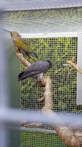 heat l for bird aviary second hand bird aviaries birds for sale in devon preloved