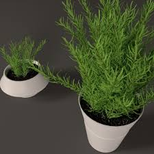 plant in white plastic pot 3d model cgtrader