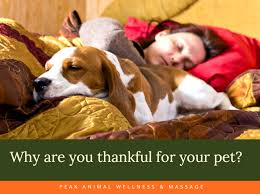 reasons you are thankful for your pet this season