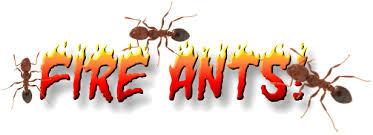 fire ants inside the house u2014 entomology and plant pathology