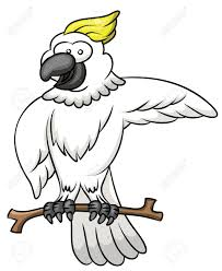 cartoon cockatiel cockatoo cartoon royalty free cliparts vectors and stock