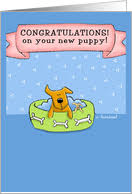 congrats on your new card congratulations on your new dog cards from greeting card universe