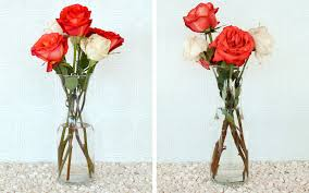 Single Rose In A Vase How To Keep Roses Alive More Com