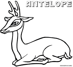 antelope coloring pages coloring pages to download and print