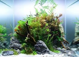 Aquascape Canada 358 Best Aquascaping Images On Pinterest Aquascaping Aquarium