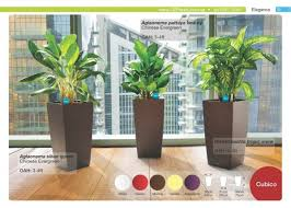 indoor plants singapore o2plants pte ltd