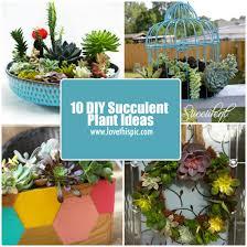 10 diy succulent plant ideas