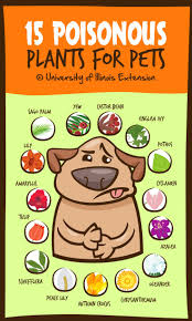 household items can be toxic to pets veterinary medicine at