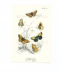 antique butterfly print art butterfly pictures small