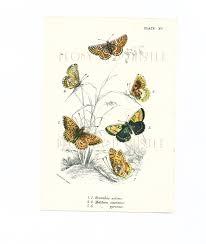 Duck Dynasty Home Decor 100 Home Decor Butterflies Framed Butterflies Double Glass