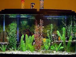awesome fish tank decorations Fish Tank Decorations What to