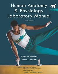 Simple Anatomy And Physiology Marieb U0026 Mitchell Human Anatomy U0026 Physiology Lab Manual Cat Version