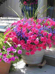 Summer Container Garden Ideas Garden Flower Garden Ideas Sun Potting Flower Garden Ideas