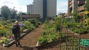 Community Gardens In Urban Areas Manjimup Community Garden