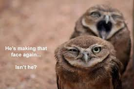 Owl Memes - hilariously adorable owl memes 18