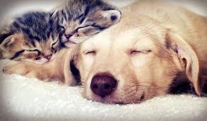 Pet Pet Sitter Cost And Dog Walker Cost Pet Sitters Ireland