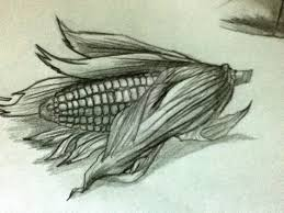 a corn realistic sketch by diamondstardust on deviantart