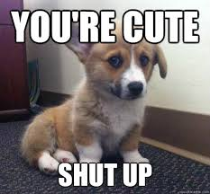 Cutest Memes - youre the cutest meme the best of the funny meme