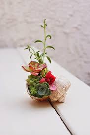 mini succulent seashell arrangement this is so cute that it makes