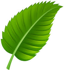 green leaves clipart clipground