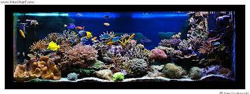 vasche acquario l acquario marino di cristiano farina faro the tank of