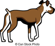 vector illustration of vector sketch two domestic dog boxer breed