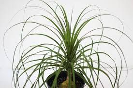 7 indoor plants that are safe for pets u0026 also improve our health