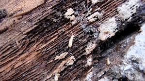 Winged Termites In Bathroom 6 Common Myths About Swarming Termites Angie U0027s List