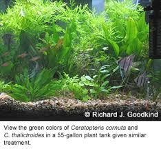 How To Aquascape A Planted Tank How To Achieve A Flourishing Plant Tank By Richard J Goodkind