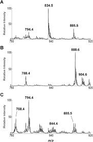 analysis of human gliomas by swab touch spray mass spectrometry