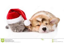 corgi christmas cards christmas lights decoration