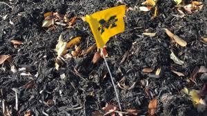Michigans State Flag Ohio State Coach U0027s Wife Finds Michigan Flag In Yard U0027not