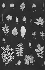 vol 4 no 3 trees the kansas school naturalist emporia state