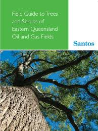 field guide to the native plants of sydney trees u0026 shrubs of east queensland trees eucalyptus