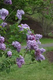 plants native to oregon 97 best garden plant ideas images on pinterest flowers plants