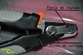 Quelle Race De Chien Choisir Test by Accessoire Coupe Ongles Pour Chien Trixie Test Avis Prix