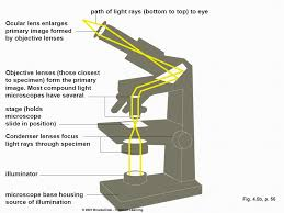 a light microscope image is formed by surface area volume ratio lab think about your cell city think