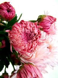 flowers in november november birth flower flower pressflower press