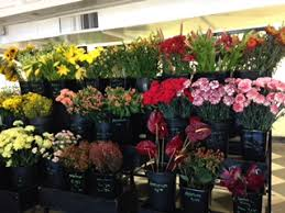 wholesale flowers wholesale flowers