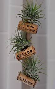 Wine Bottle Planters by Air Plant Wine Bottle Cork Magnets Cork Magnets And Plants