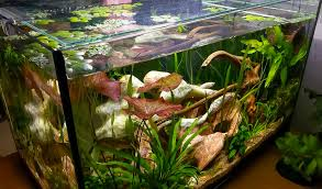 aquarium design exle low tech tank show and tell low tech can be lush too page