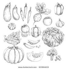 vegetables vector icons set isolated sketch stock vector 623684633
