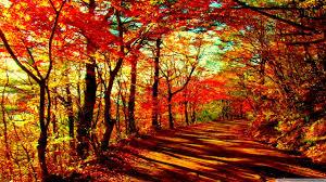 autumn forest 4k hd desktop wallpaper for u2022 dual monitor