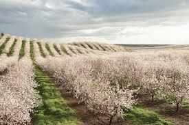 california almonds the almond lifecycle