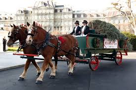 christmas tree delivery obama welcomes white house christmas tree msnbc
