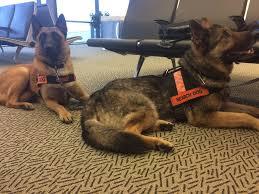 belgian sheepdog rescue ontario ottawa valley search and rescue dog association home facebook