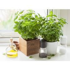 les herbes aromatiques en cuisine cultiver les plantes aromatiques dans sa cuisine