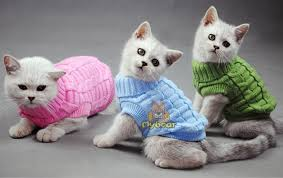 sweaters for cats cat sweater accessories products for cats