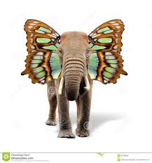 elephant with butterfly wings stock photo image 84178194